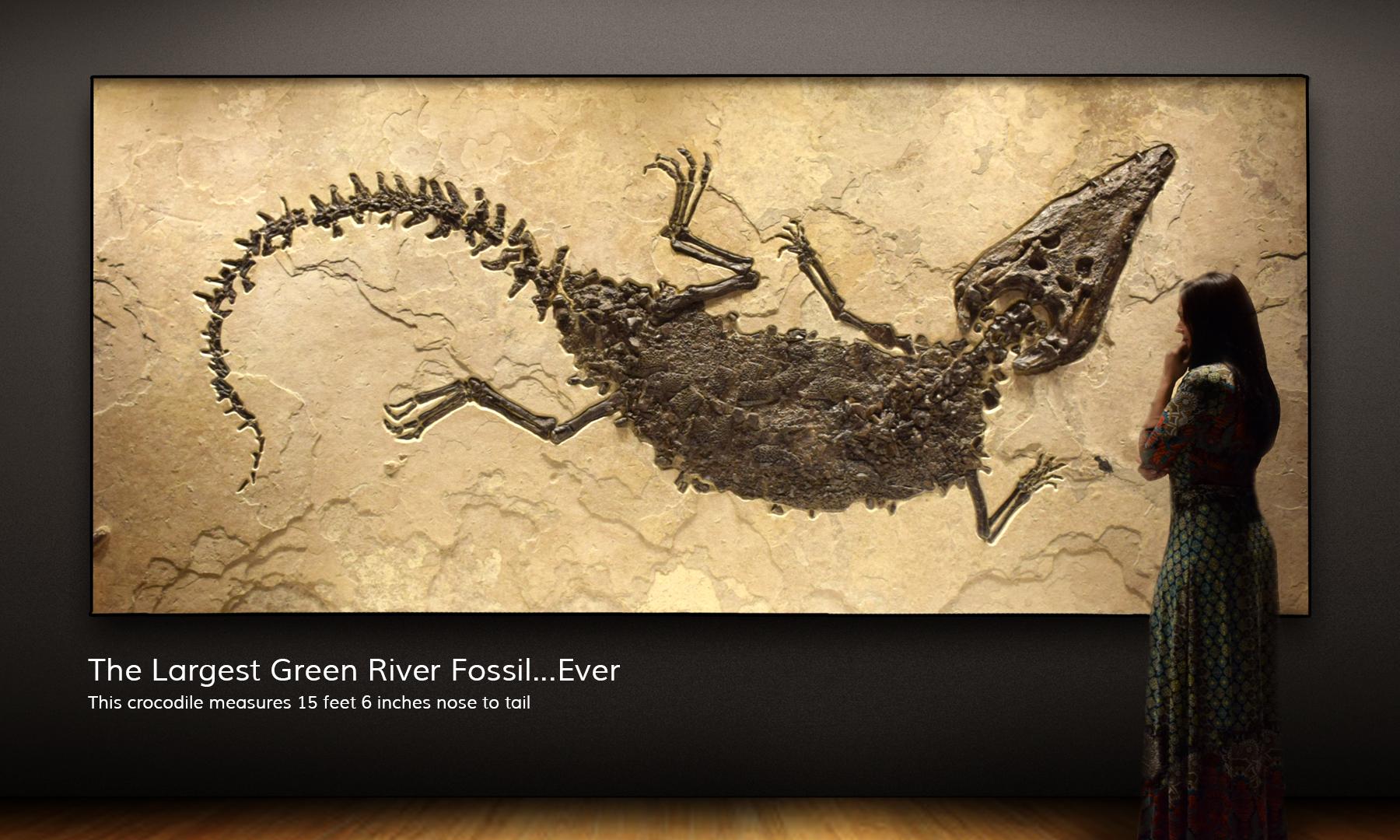 Fish Fossil Wall Art Furniture And Custom Interiors